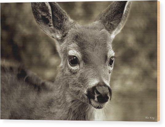 Young Curious Deer Wood Print