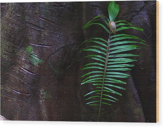 Palm Leaf Against Tree Wood Print