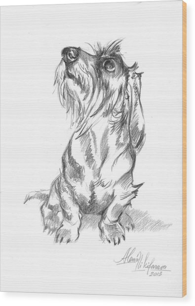 Young Wire-haired Dachshund Looking Up Wood Print