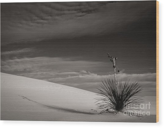 Yucca In The Sandsiii Wood Print
