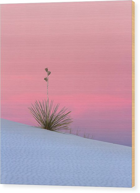 Yucca On Pink And White Wood Print