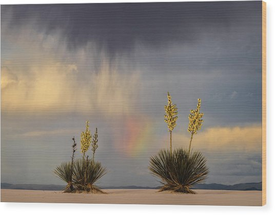 Yuccas, Rainbow And Virga Wood Print by Don Smith