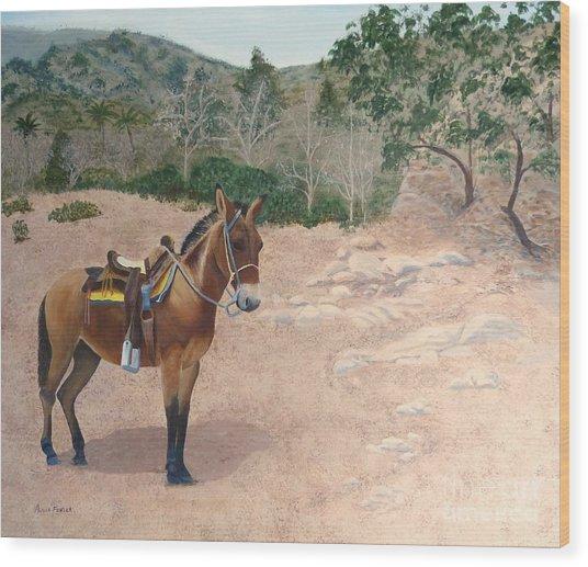 Zachary The Mule Wood Print