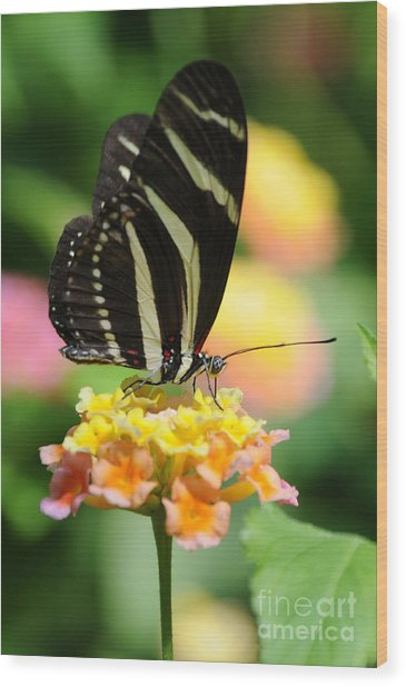 Zebra Butterfly Wood Print