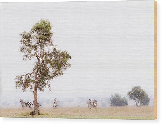 Zebra In The Mist Wood Print
