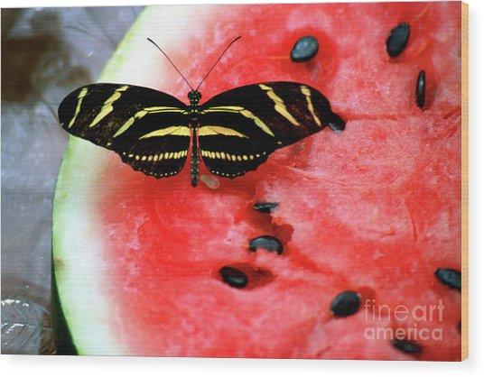 Zebra Longwing Butterfly On Watermelon Slice Wood Print