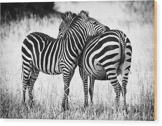 Zebra Love Wood Print