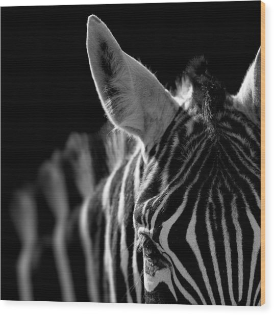 Portrait Of Zebra In Black And White Wood Print