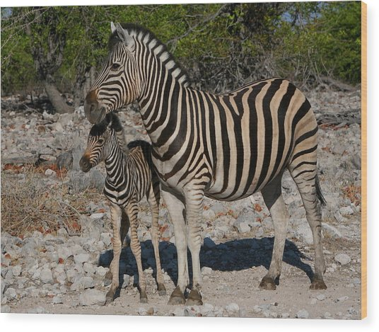 Zebra Mother And Baby Wood Print