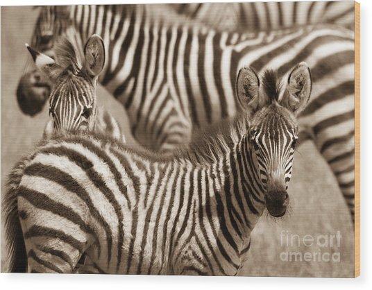 Zebra Stripes Galore Wood Print