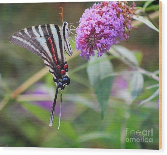 Zebra Swallowtail Butterfly On Butterfly Bush  Wood Print