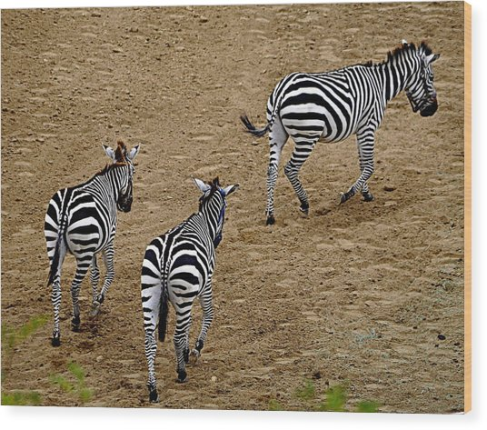 Zebra Tails Wood Print