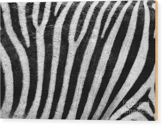 Zebra Texture Wood Print