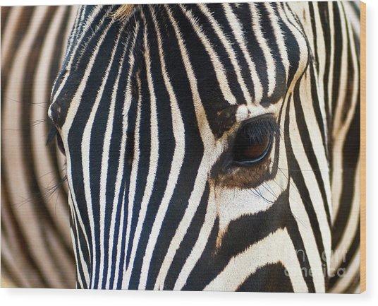 Zebra Vibrations Wood Print