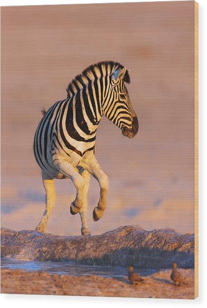 Zebras Jump From Waterhole Wood Print