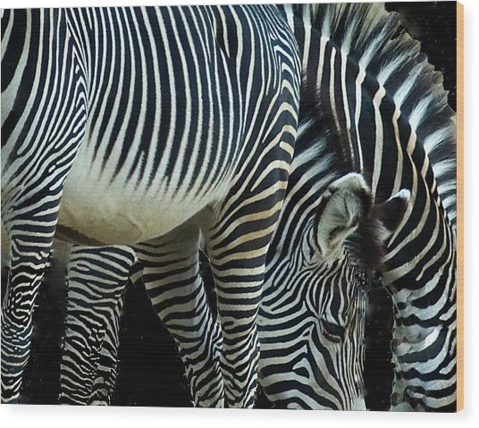 Wood Print featuring the photograph Zebras by Mae Wertz