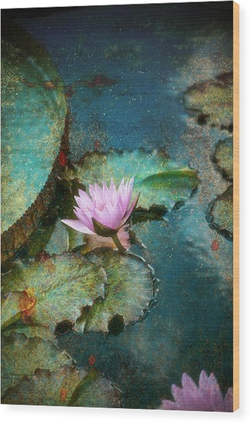 Zen Water Lily Wood Print