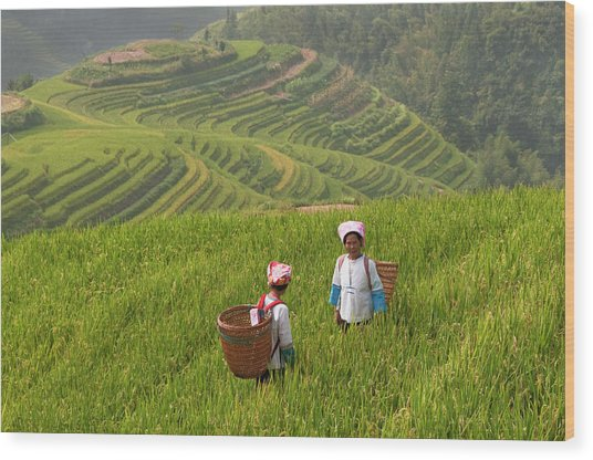 Zhuang Minority Women Walk Through Rice Wood Print