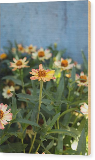 Zinnia Wood Print by Denice Breaux