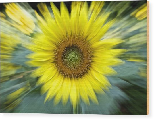 Zoom Sunflower Wood Print