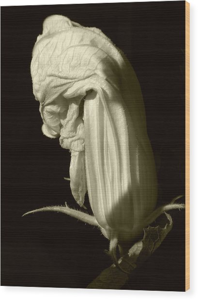 Zucchini Flower Wood Print