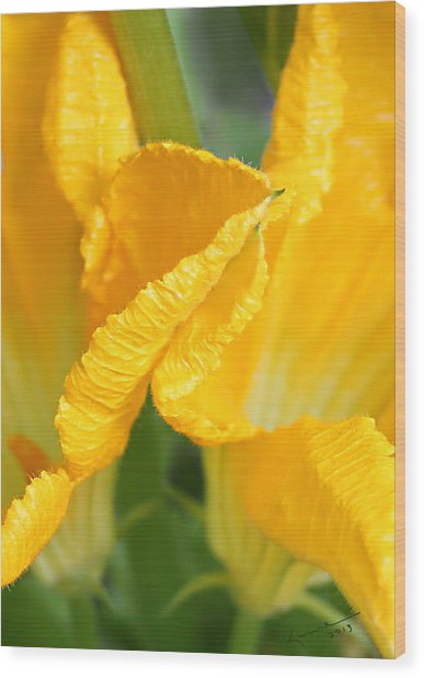 Zucchini Flowers In May Wood Print