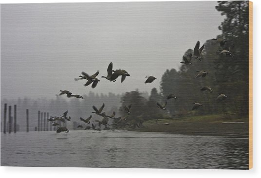 Fall Migration Lake Cd'a Idaho Wood Print by Grover Woessner
