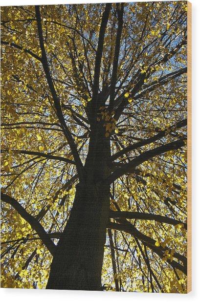 Ithaca New York Fine Art Print Wood Print by Ian Stevenson
