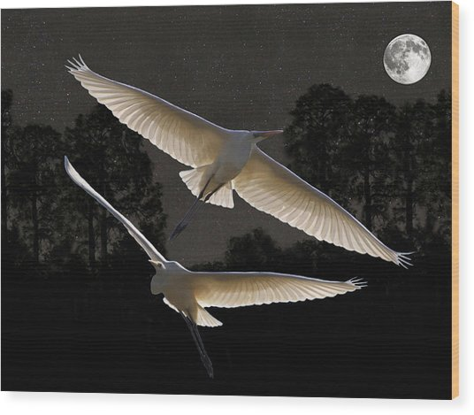 Majestic Great Egrets  Wood Print by Eric Kempson