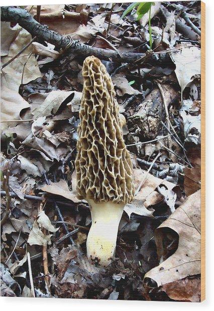 Morel Mushroom Wood Print