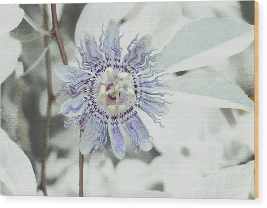 Passion Flower On White Wood Print