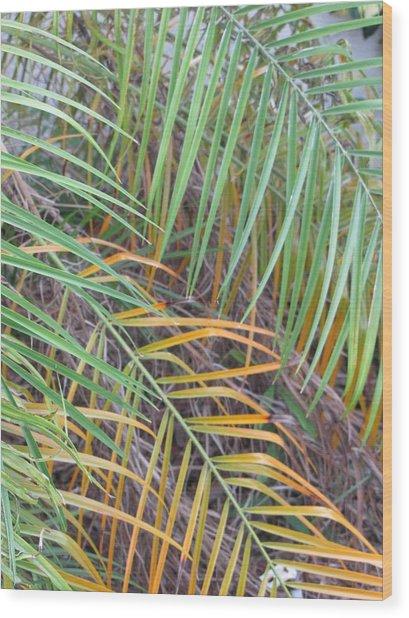 014 Palm Leaves Wood Print by Carol McKenzie