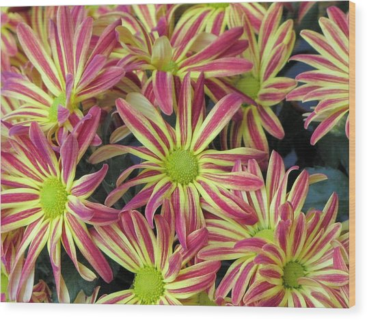 015 Pink And Yellow Flowers Wood Print by Carol McKenzie