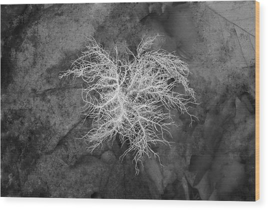 0802-0013 Reindeer Lichen In The Smith Creek Preserve Wood Print by Randy Forrester