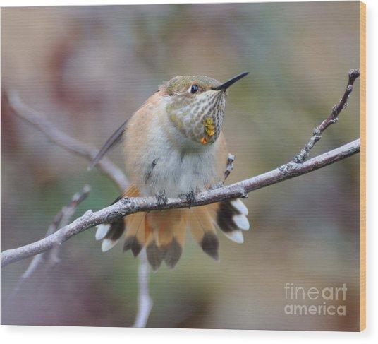 Hummingbird Stretch Four Wood Print