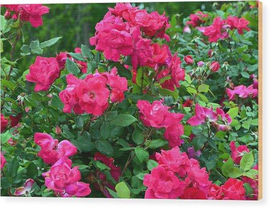 A Rose Is A Rose.... Wood Print by Tanya Tanski