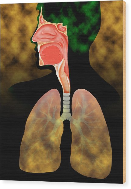 Air Pollution Wood Print by David Gifford