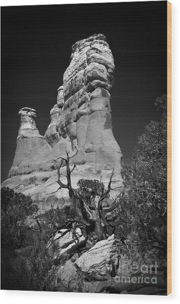 Arches National Park Bw Wood Print
