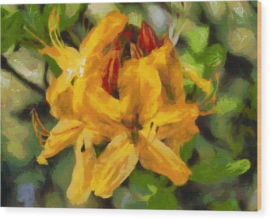 Azaleas In Bloom Wood Print