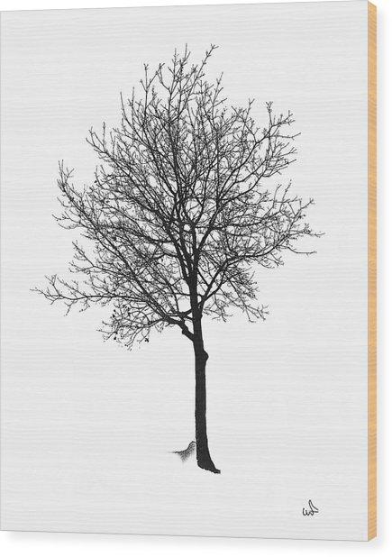 Bare Winter Tree Wood Print