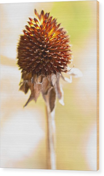 Black-eyed Susan After The Winter Wood Print