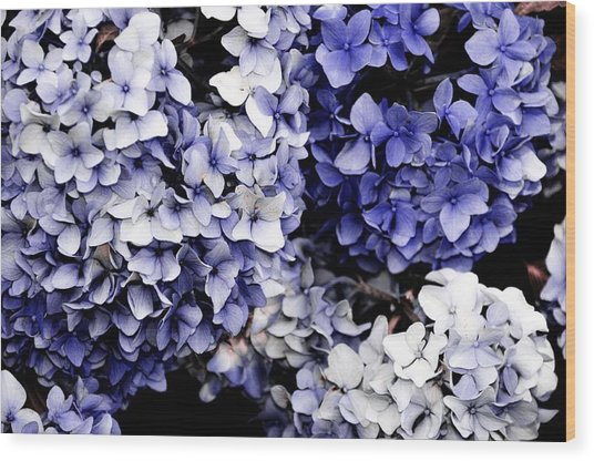 Blue Bloom Cluster  Wood Print by JAMART Photography