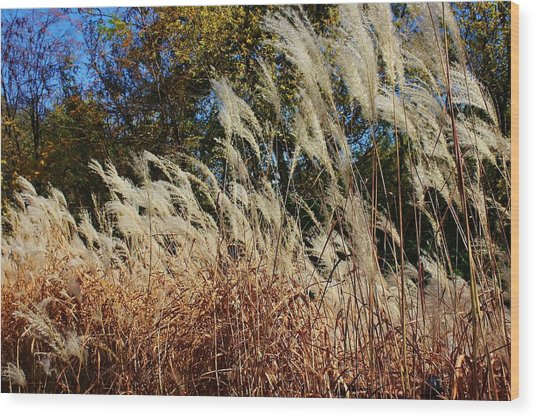 Blowing In The Wind Wood Print by Bruce Bley