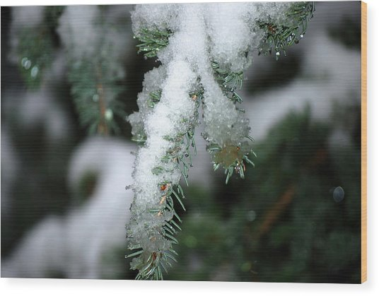 Bokeh Of Evergreen In Snow Wood Print