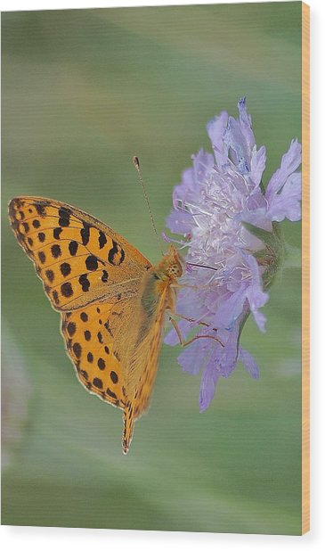 Butterfly On Right Position Wood Print by Meeli Sonn