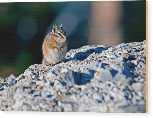 Chipmunk Wood Print by Elijah Weber