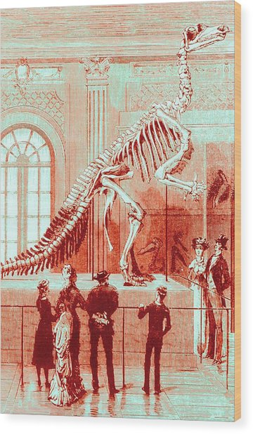 Coloured Engraving Of An Iguanodon Museum Exhibit Wood Print by Mehau Kulyk