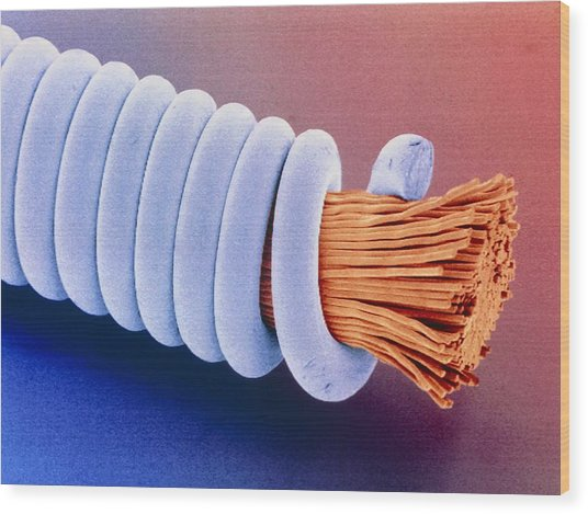 Coloured Sem Of 'superwound' Guitar String. Wood Print by Power And Syred