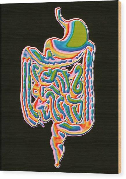 Digestive System Wood Print by Pasieka