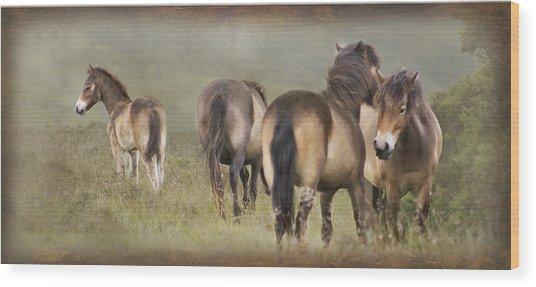Exmoor Ponies Wood Print